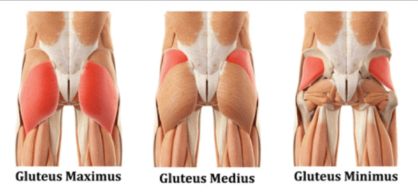 How to get a bigger butt: Gluteal muscle anatomy